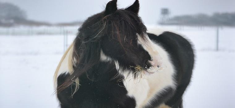erkennen haarlinge und läuse beim pferd