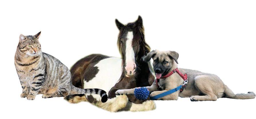 ausmalbilder hunde katzen pferde die beste idee zum ausmalen von seiten. Black Bedroom Furniture Sets. Home Design Ideas